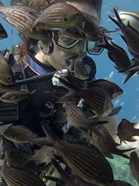 PADI scuba diver surrounded by damselfish on a training dive in protaras, cyprus