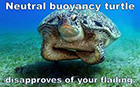 Neutral Buoyancy Turtle Disapproves of your flailing
