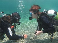 discover scuba diving experience to try diving with scuba tech diving centre