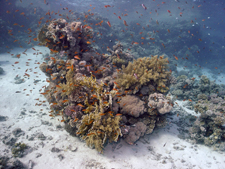 coral reef on padi project aware scuba courses
